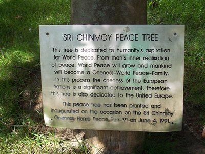 Peace Tree - planted in 1991
