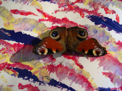 Butterfly on the Harmony painting