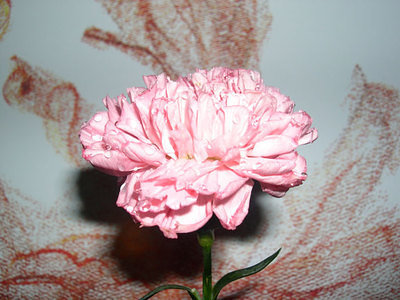 Carnation and painting