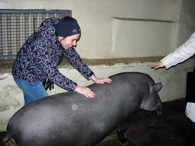 Trying to turn tapir around