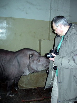 Tapir checking out Sergey's pocket