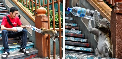 Giving water to monkey