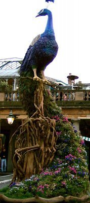 Covent Garden: the blossoming peacock