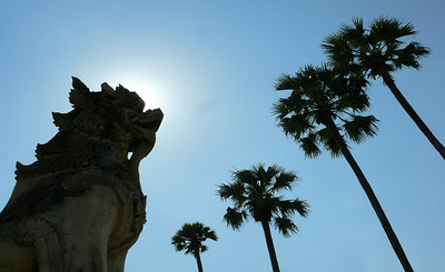 Dragon and palms