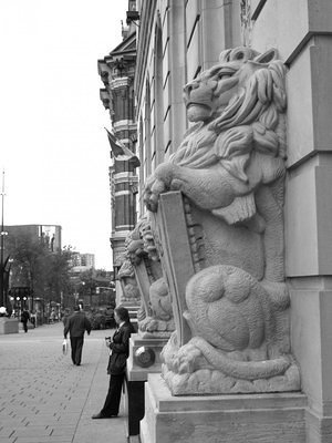 Lions on Elgin St