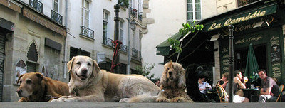the patient dogs of Paris