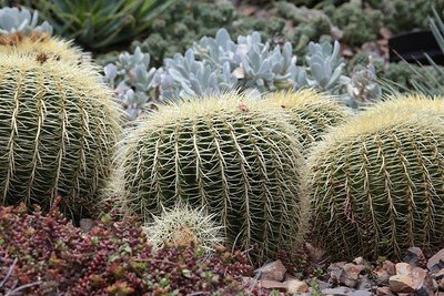 2013-10-05_Royal_Botanic_Gardens