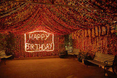 27th August 2014 Birthday Functions + Magical Wonderland Carnations