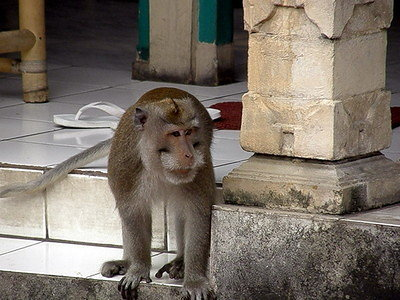 monkeys everywhere in Ubud near the Sacred Monkey Forest