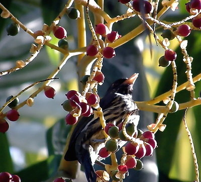 bird with berries